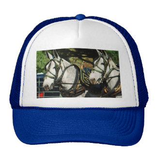 mule day parade cap