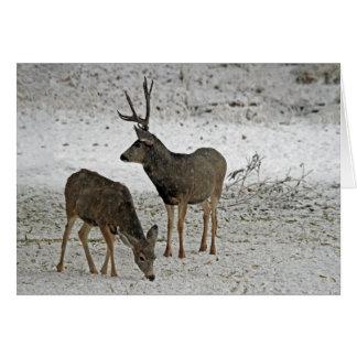 Mule deer buck and doe card