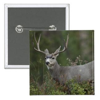 Mule Deer buck browsing in brush 15 Cm Square Badge