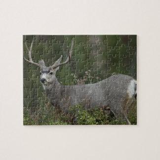 Mule Deer buck browsing in brush Jigsaw Puzzles
