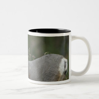 Mule Deer buck browsing in brush Two-Tone Mug