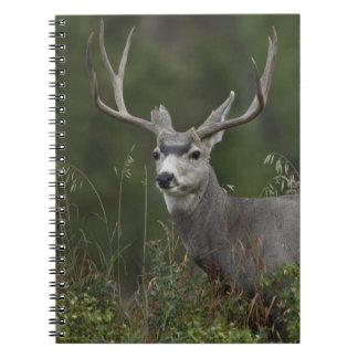 Mule Deer buck browsing in brush Spiral Note Book