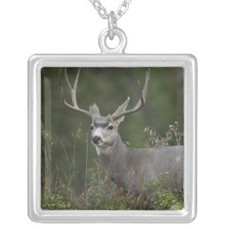 Mule Deer buck browsing in brush Square Pendant Necklace