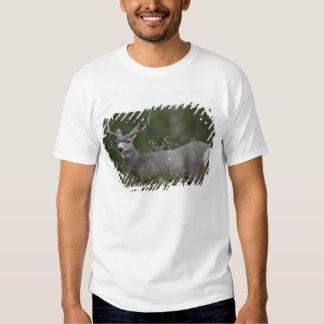 Mule Deer buck browsing in brush T-shirt