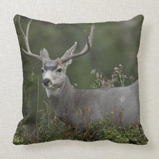 Mule Deer buck browsing in brush Throw Cushion