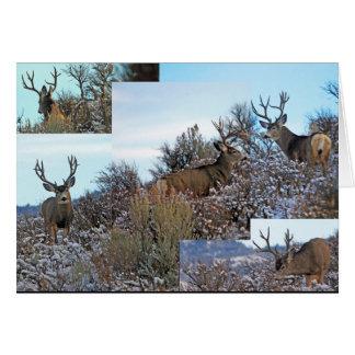 Mule Deer customize Card