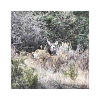 Mule Deer Doe 8x8 Canvas