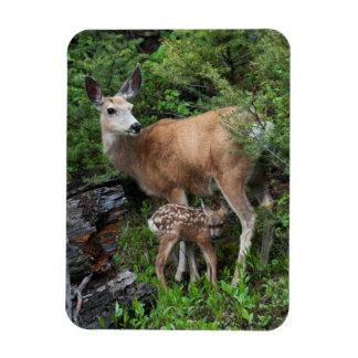 Mule Deer Doe with New Born Fawn Rectangular Photo Magnet