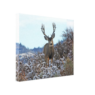 Mule deer photo art 1a canvas print
