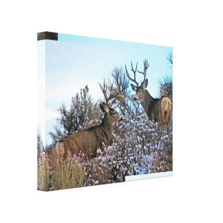 Mule deer photo art 5 canvas print