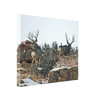 Mule deer photography 2 canvas print
