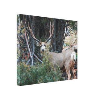Mule deer photography 3 canvas print