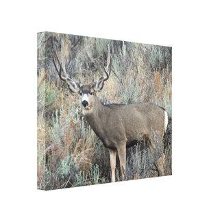 Mule deer photography canvas print