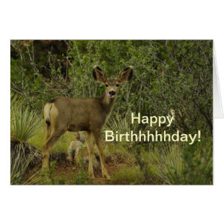 Mule Deer Raspberry Birthday Card
