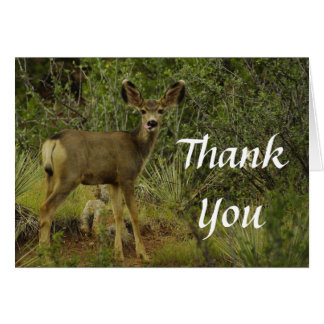 Mule Deer Raspberry Thank You Card
