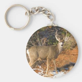Mule Deer Staring Key Ring
