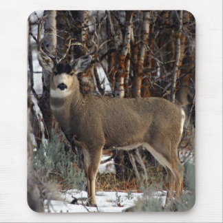 Mule deer ,wellsville mouse pad