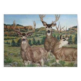 Mule Deer Wildlife Art Greeting Card