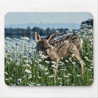Mule Deer-young fawn in green field of white daisi Mousepads