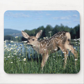 Mule Deer-young fawn in green field of white daisi Mousepad
