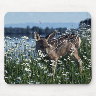 Mule Deer-young fawn in green field of white daisi Mouse Pads
