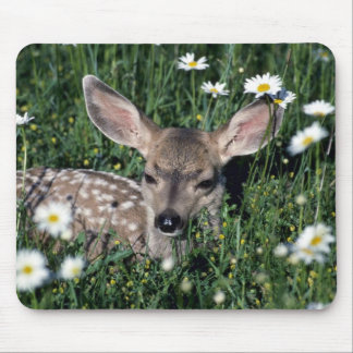 Mule Deer-young fawn lying in green field of white Mouse Pad