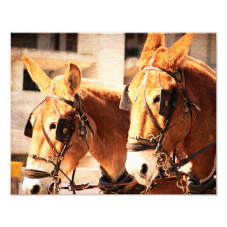 mule team photograph