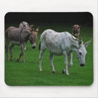 Mules And Donkeys Mousepad