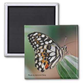 Multi-colored Spotted Butterfly Magnet