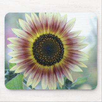 Multi-colored Sunflower Mouse Pad