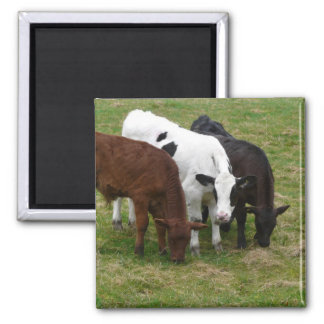 Multi-COW-tural Square Magnet