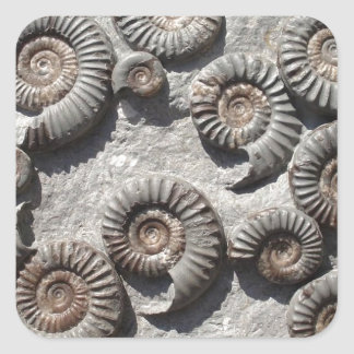 Multi fossil ammonites from the Lower Lias Square Sticker
