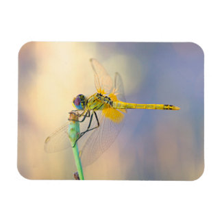 Multicolored Dragonfly Magnet