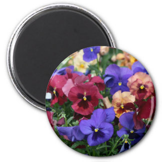 Multicolored Pansies Magnet