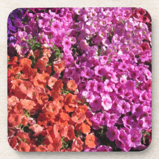 Multicolored petunia flowers texture background coaster