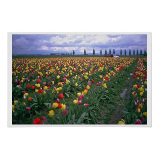Multicolored Rows Poster