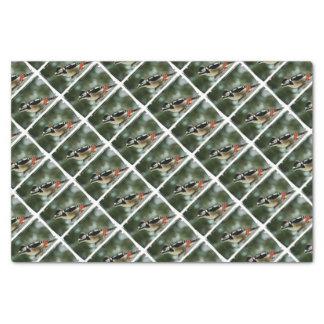 Multicolored woodpecker - Photography Jean Louis Tissue Paper