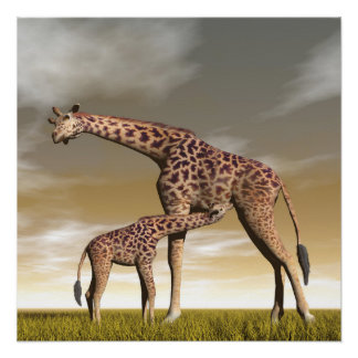 Mum and baby giraffe - 3D render Poster