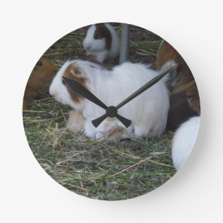 Mummy_And_Baby_Guinea_Pig Clocks
