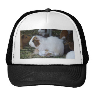 Mummy_And_Baby_Guinea_Pig_Truckers_Cap. Cap