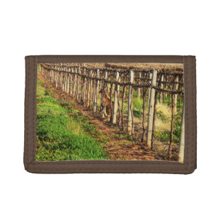 Mummy Kangaroo And Baby Hiding In Vines, Trifold Wallets
