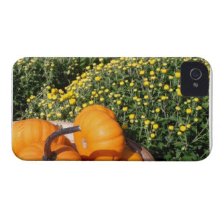 Mums and Mini Pumpkins Blackberry Bold Case