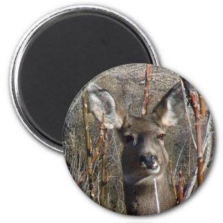 Munching Deer 6 Cm Round Magnet