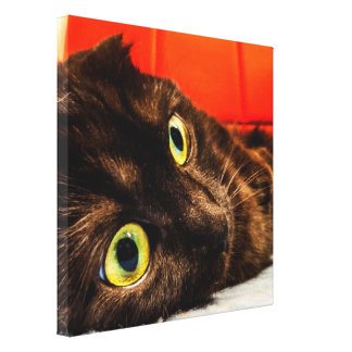 Munchkin Cat Cutest Face Ever Canvas Print