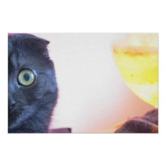 Munchkin Cat Poster
