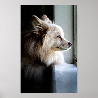 Murray - Pomeranian Poster
