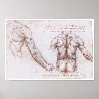 Muscles of the Back, Leonardo da Vinci Poster