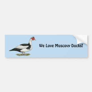 Muscovy Black Pied Drake Bumper Sticker