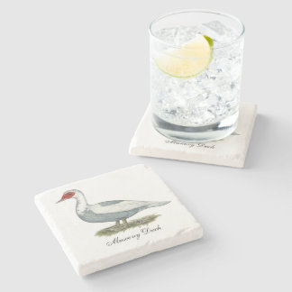 Muscovy Blue Pied Duck Stone Coaster