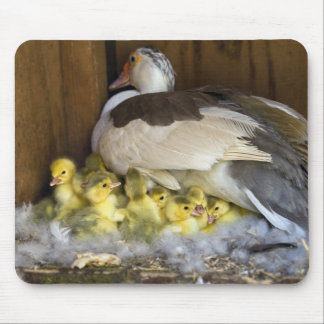 Muscovy Mouse Pad